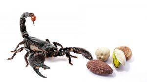 Hinter der harten Schale des Skorpion-Mannes steckt ein emotionaler weicher Kern.