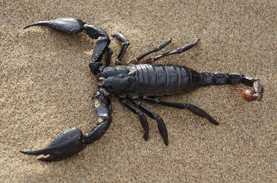 Passt sternzeichen zu aszendent mir skorpion wer zwilling zwilling aszendent